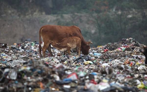 Аналіз впливу сміттєзвалищ на екосистему